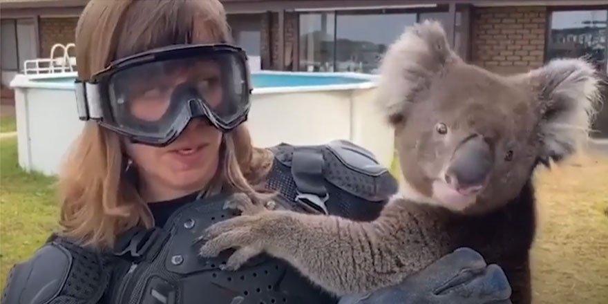 Koala için zırh giydi!