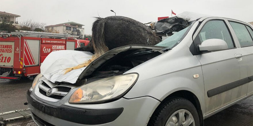 İstanbul'da 3 at telef oldu atın biri ön camdan böyle girdi!