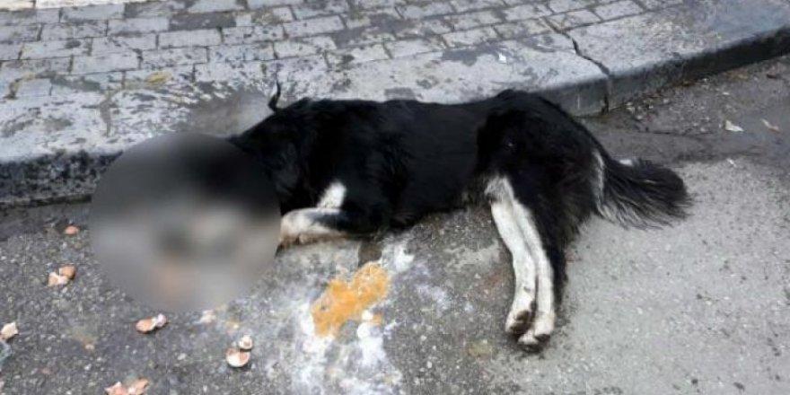 Sokak hayvanlarını öldüren kasap hakkında flaş gelişme!