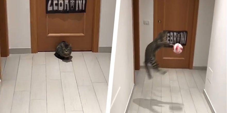 """Sosyal medya bu kediyi konuşuyor: """"Karius'tan iyi kaleci"""""""