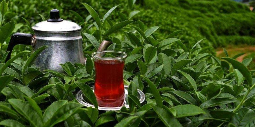 Çay ve Kahvenin Vücuttaki Etkileri