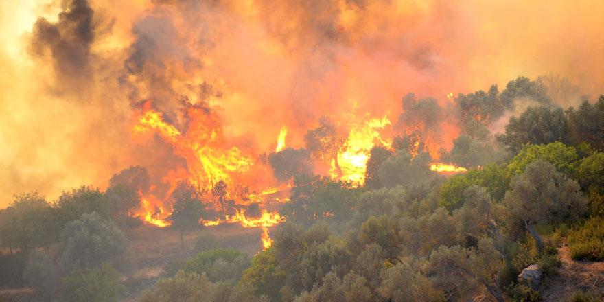 Adalet Bakanı Gül paylaştı... İşte orman yangınına neden olanlara verilen cezalar
