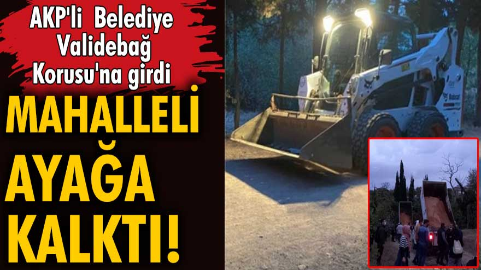 AKP'li Üsküdar Belediyesi Validebağ Korusu'na girdi